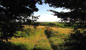 Randonnée Marche HARAMONT - en forêt de Retz_79_08_2019_vers Taillefontaine et Retheuil par les lisières - Photo 28