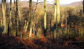 Trail Walk PIERREFONDS - en forêt de Compiègne_24_Tournantes sur le Voliard et sur la Fortelle_chaussée Brunehaut - Photo 106