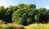 Randonnée Marche HARAMONT - en forêt de Retz_79_08_2019_vers Taillefontaine et Retheuil par les lisières - Photo 27