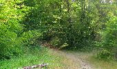 Randonnée Marche LACROIX-SAINT-OUEN - en forêt de Compiègne_35_la Croix Saint-Sauveur_le Ru du Goderu - Photo 64