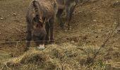 Randonnée Marche Malijai - Le Tour de Sr Philippe - Photo 2