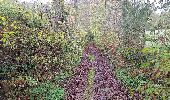 Trail Walk SAINT-PLANTAIRE - le rocher de la fileuse - Photo 12