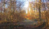 Trail Walk SAINT-JEAN-AUX-BOIS - en forêt de Compiègne_33_12_2019_les Tournantes de l'étang Saint-Jean et des Prés Saint-Jean - Photo 57