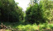 Randonnée Marche LACROIX-SAINT-OUEN - en forêt de Compiègne_35_la Croix Saint-Sauveur_le Ru du Goderu - Photo 9