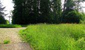 Randonnée Marche COYOLLES - en forêt de Retz_78_les rayons du Rond Capitaine - Photo 106