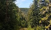 Randonnée Marche MUHLBACH-SUR-BRUCHE - Le Jardin des Fées par la cascade de Soulzbach - Photo 29