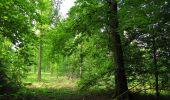 Randonnée Marche COYOLLES - en forêt de Retz_78_les rayons du Rond Capitaine - Photo 58
