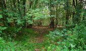 Randonnée Marche SAINT-JEAN-AUX-BOIS - en forêt de Compiègne_6_les Grands Monts_la route tournante sur la tête St-Jean - Photo 145