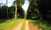 Randonnée Marche COYOLLES - en forêt de Retz_78_les rayons du Rond Capitaine - Photo 95