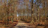 Trail Walk PIERREFONDS - en forêt de Compiègne_24_Tournantes sur le Voliard et sur la Fortelle_chaussée Brunehaut - Photo 126
