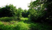 Randonnée Marche COYOLLES - en forêt de Retz_78_les rayons du Rond Capitaine - Photo 86