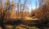 Trail Walk PIERREFONDS - en forêt de Compiègne_24_Tournantes sur le Voliard et sur la Fortelle_chaussée Brunehaut - Photo 146