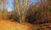 Trail Walk PIERREFONDS - en forêt de Compiègne_24_Tournantes sur le Voliard et sur la Fortelle_chaussée Brunehaut - Photo 7