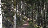 Randonnée Marche MUHLBACH-SUR-BRUCHE - Le Jardin des Fées par la cascade de Soulzbach - Photo 30