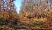 Trail Walk PIERREFONDS - en forêt de Compiègne_24_Tournantes sur le Voliard et sur la Fortelle_chaussée Brunehaut - Photo 143