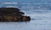Randonnée Marche MESQUER - la pointe de Merquel à marée basse - Photo 14