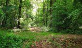 Randonnée Marche COYOLLES - en forêt de Retz_78_les rayons du Rond Capitaine - Photo 12