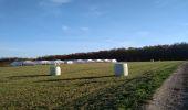 Trail Walk SENTHEIM - Sentheimtour Covid série 2 - Photo 9