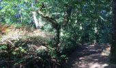 Randonnée Trail NEANT-SUR-YVEL - Autour des étangs à partir du gîte de tante Phonsine - Photo 11
