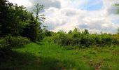 Randonnée Marche COYOLLES - en forêt de Retz_78_les rayons du Rond Capitaine - Photo 135