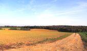Randonnée A pied VILLERS-COTTERETS - le GR11A  dans la Forêt de Retz  - Photo 159