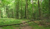 Randonnée Marche SAINT-JEAN-AUX-BOIS - en forêt de Compiègne_2_ruines gallo-romaines de Champlieu_les Petits Monts - Photo 105