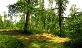 Randonnée Marche COYOLLES - en forêt de Retz_78_les rayons du Rond Capitaine - Photo 16