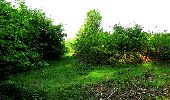 Randonnée Marche COYOLLES - en forêt de Retz_78_les rayons du Rond Capitaine - Photo 77