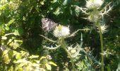 Trail Walk VASSIEUX-EN-VERCORS - crêtes de gageure col de la chaux - Photo 2