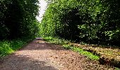 Randonnée Marche COYOLLES - en forêt de Retz_78_les rayons du Rond Capitaine - Photo 24