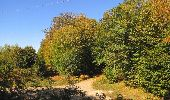Randonnée A pied VILLERS-COTTERETS - le GR11A  dans la Forêt de Retz  - Photo 10