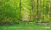 Randonnée Marche LONGPONT - en forêt de Retz_77_Longpont_Puiseux en Retz_AR - Photo 114