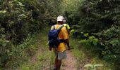 Trail Walk RIVIERE-SALEE - JOUBADIÈRE - MORNE CONSTANT - PAGERIE - Photo 6