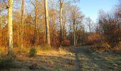 Trail Walk SAINT-JEAN-AUX-BOIS - en forêt de Compiègne_33_12_2019_les Tournantes de l'étang Saint-Jean et des Prés Saint-Jean - Photo 194