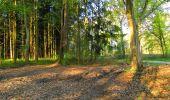 Randonnée A pied VILLERS-COTTERETS - le GR11A  dans la Forêt de Retz  - Photo 131
