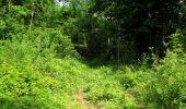 Randonnée Marche COYOLLES - en forêt de Retz_78_les rayons du Rond Capitaine - Photo 158