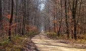 Trail Walk PIERREFONDS - en forêt de Compiègne_24_Tournantes sur le Voliard et sur la Fortelle_chaussée Brunehaut - Photo 122