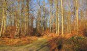 Trail Walk SAINT-JEAN-AUX-BOIS - en forêt de Compiègne_33_12_2019_les Tournantes de l'étang Saint-Jean et des Prés Saint-Jean - Photo 40