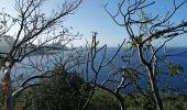 Randonnée Marche LES ANSES-D'ARLET - cap salomon - Photo 5