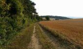 Randonnée Marche NAILLY - Le Fay-Villeperrot-Villenavotte - Photo 17