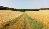 Randonnée Marche NAILLY - Le Fay-Villeperrot-Villenavotte - Photo 11