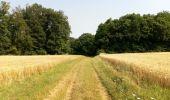 Randonnée Marche NAILLY - Le Fay-Villeperrot-Villenavotte - Photo 2