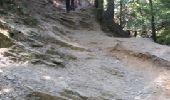 Trail Walk Aywaille - REMOUCHAMPS ... La vallée du Ninglinspo et la charmille. - Photo 2