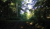 Randonnée Marche SAINT-JEAN-AUX-BOIS - en forêt de Compiègne_19_le Puits d'Antin_les Mares St-Louis_La Muette - Photo 185