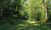 Trail Walk SAINT-JEAN-AUX-BOIS - en forêt de Compiègne_19_le Puits d'Antin_les Mares St-Louis_La Muette - Photo 31