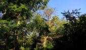 Randonnée Marche SAINT-JEAN-AUX-BOIS - en forêt de Compiègne_19_le Puits d'Antin_les Mares St-Louis_La Muette - Photo 158