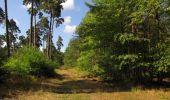 Trail Walk SAINT-JEAN-AUX-BOIS - en forêt de Compiègne_19_le Puits d'Antin_les Mares St-Louis_La Muette - Photo 74