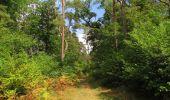 Randonnée Marche SAINT-JEAN-AUX-BOIS - en forêt de Compiègne_19_le Puits d'Antin_les Mares St-Louis_La Muette - Photo 32