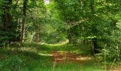 Randonnée Marche SAINT-JEAN-AUX-BOIS - en forêt de Compiègne_19_le Puits d'Antin_les Mares St-Louis_La Muette - Photo 102
