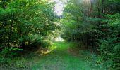 Randonnée Marche SAINT-JEAN-AUX-BOIS - en forêt de Compiègne_19_le Puits d'Antin_les Mares St-Louis_La Muette - Photo 177